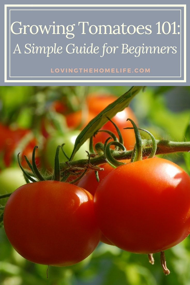 Growing tomatoes, gardening, basic gardening, tomatoes, fertilizer, hornworms, growing, early girl, big beef, cherry, grape, tomato cages, compost, epsom salt, Dr. Earth